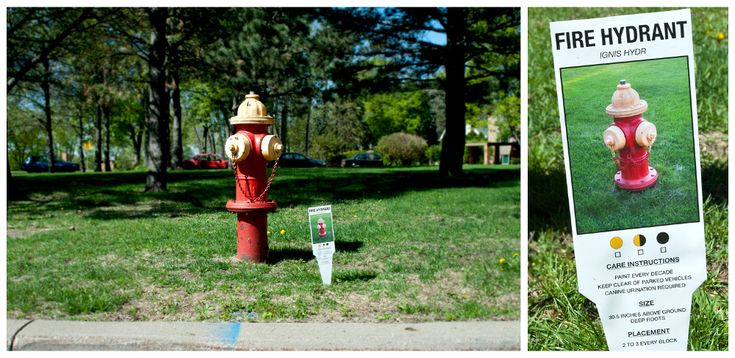Fire Hydrant: There's no limit to what can be planted in the ground. These tags highlight a few of the smaller things we all see every day.