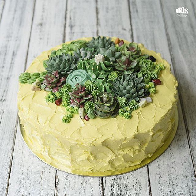 В такой солнечный день хочется показать именно этот тортик но погода обманчива, выйдя на улицу, щуришься от солнца и кутаешься в пальто, так как колючий ветер не дает расслабиться.  #flowercake #flowercakeclass  #wilton #cakeclass #bakingclass #buttercream #baking #cake #flower #koreacake #florist #flowerdecoration #fondant #fondantcake #koreanstyle #cakedesign #cakeart #iris_bakery #succulent #succulents #succulentlove #succulents_only