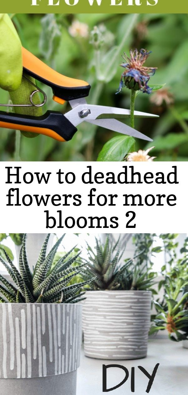 How To Deadhead Flowers For More Blooms 2 Deadheading Flowers Plant Clips Plants
