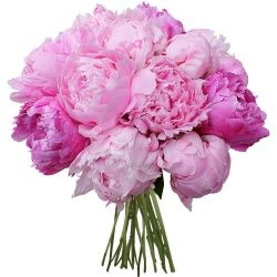 I would love this in white for the bouquet...55 euros as pictured in white or pink from 123fleurs.com