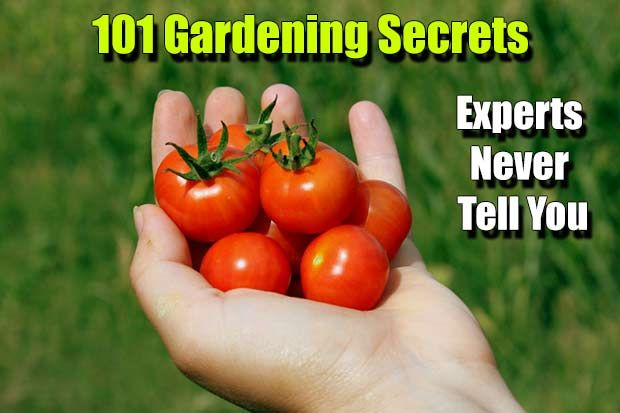 Gardening Secrets Experts Never Tell You, prepping, gardening, food, grow, growing, plants, summer, spring, shtf, secrets, gardening secrets,