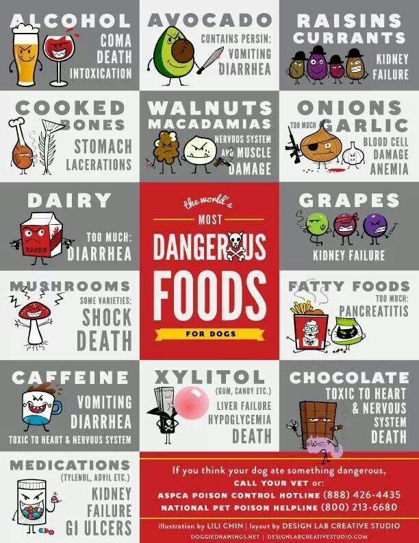 Dangerous foods for dogs. Doggy health...