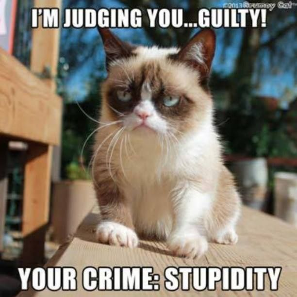 grumpy cat images with quotes | Grumpy Cat quotes ...For more hilarious sarcasm and sarcastic quotes ...