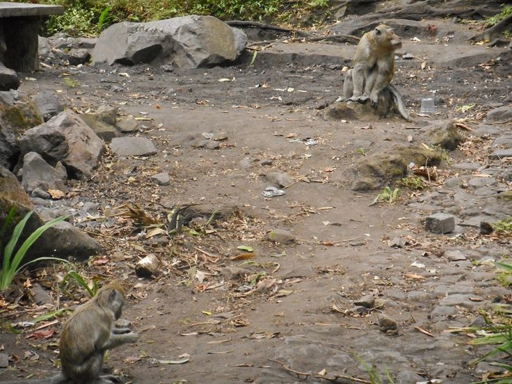Coban Rondho Waterfall, be carefull with the monkeys, they would grab your lunch! #Malang #EastJava #Indonesia