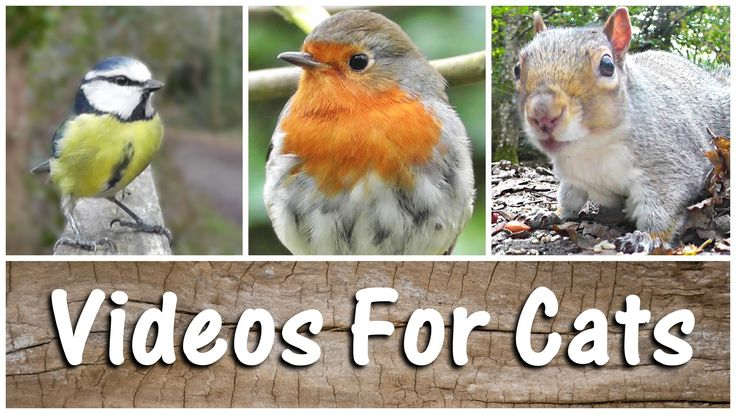 SPECTACULAR Videos For Cats To Watch Birds & Squirrels - The Ultimate Co...