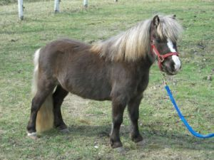 1000 Images About Miniature Horses On Pinterest Carson