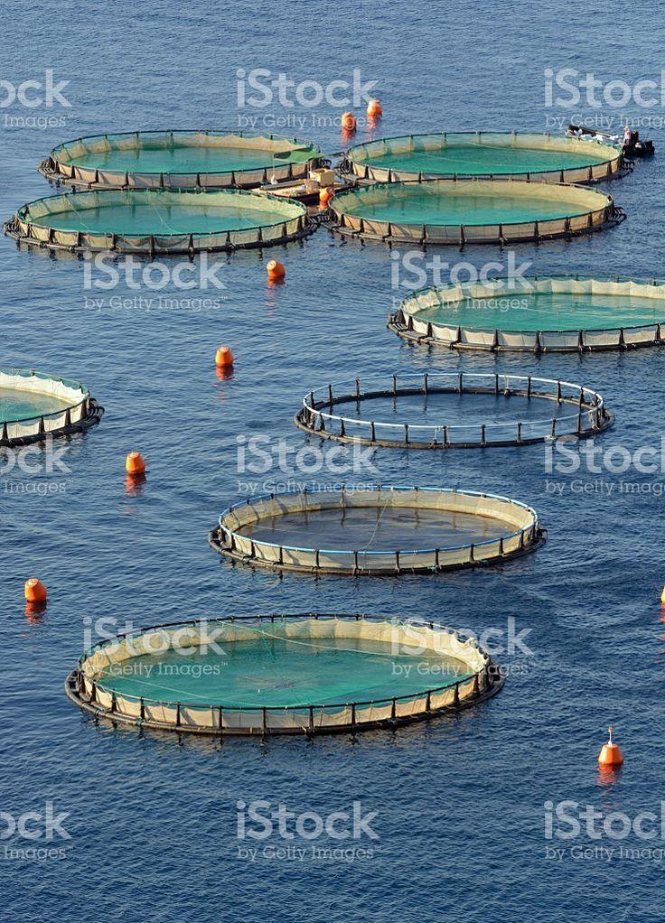 Aquaculture Instalations royalty-free stock photo