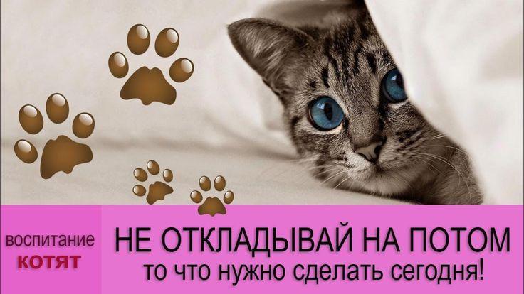 🐾 Удивительные факты о кошках: успей воспитать котенка до 6 месяцев! 🐾