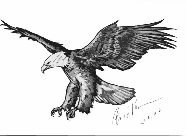 Aquila - disegnata a mano rielaborata digitalmente http://www.cs4rt.com/portfolio  #graficaDigitale #disegnoRielaborato #grafica2D