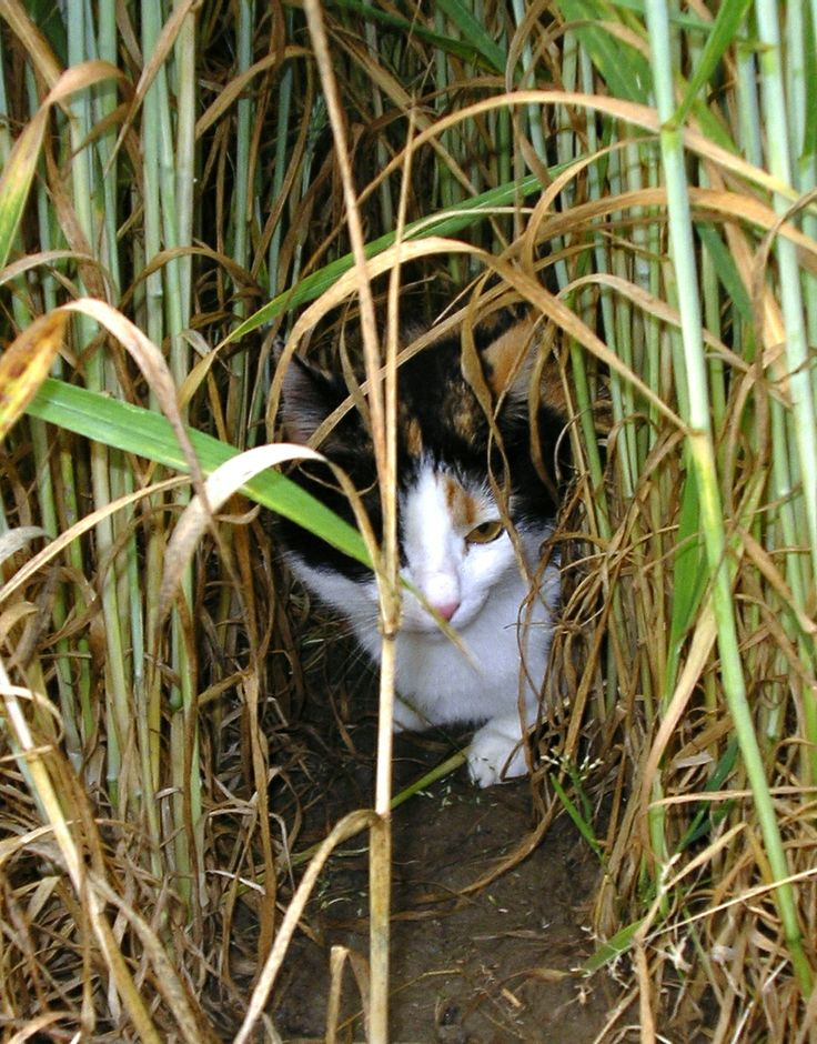 Mia in un campo di grano