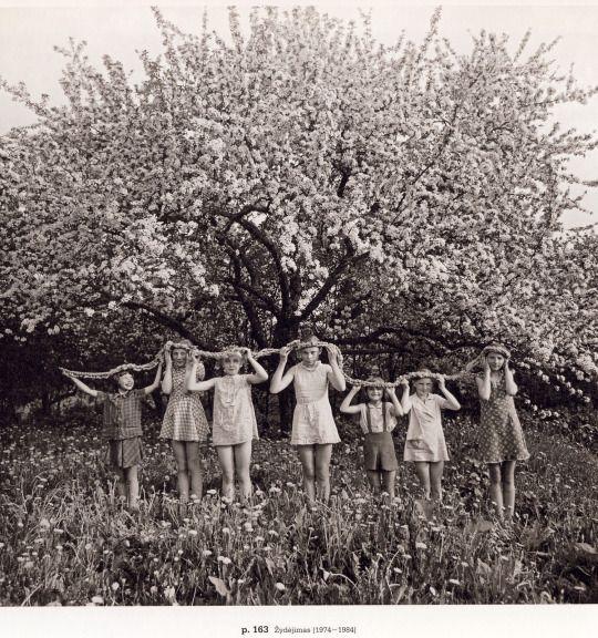 Žydėjimas, Blossom (1974–1984) Photographs by Romualdas Rakauskas