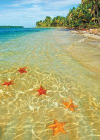 Starfish Beach, Bocas del Toro. Apparently a roundtrip water taxi should be $8-15 and we will need to take a cooler of beverages as there is no bar on the beach.