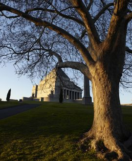 lone tree memorial day