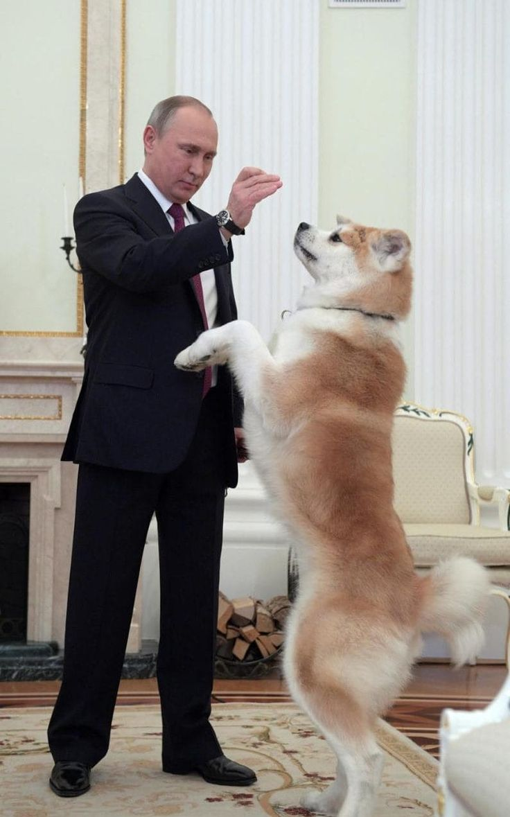 Russian President Vladimir Putin plays with his dog Yume, a female Akita Inu, at the Kremlin in Moscow, Russia
