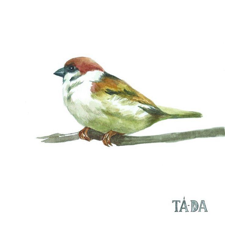 참새, sparrow, bird in city, TA-DA candle, tada candle, illustration, 타다바이비엠,타다캔들, 일러스트.