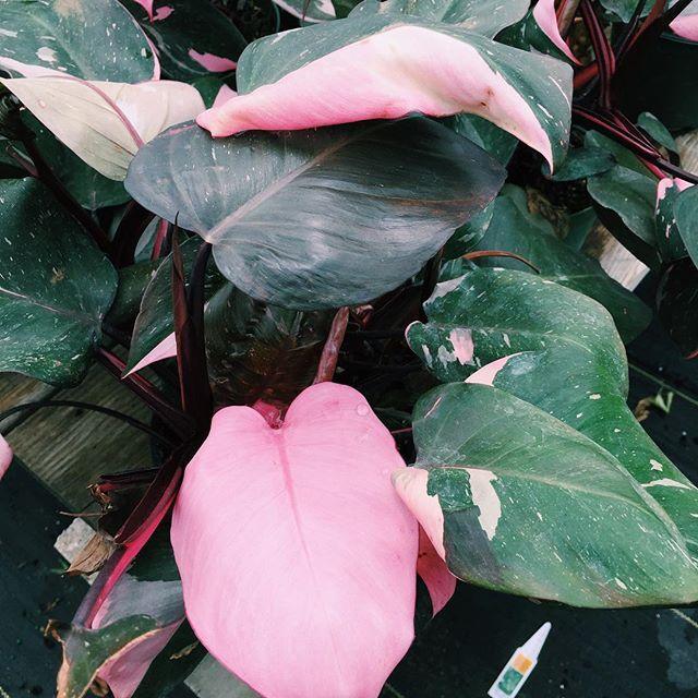 63 best plants i need images on pinterest indoor plants house plants and inside garden. Black Bedroom Furniture Sets. Home Design Ideas