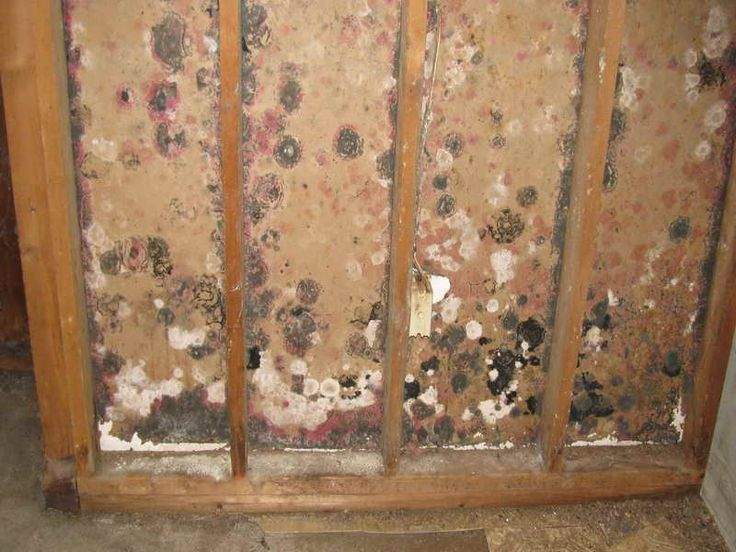 How To Remove Black Mold The Effective Way: Black Mold Removal In Wooden ~  Gamesbadge