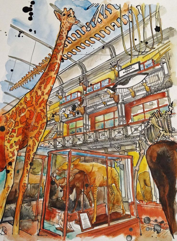 Ink and water color drawing of the Natural History Museum in Dublin