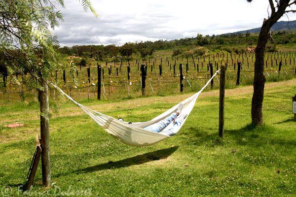 vin colombie Visitez Villa de Leyva: un retour dans le passé!