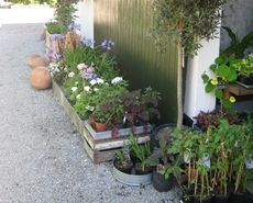 Henriettes have, planteskole, butikk og inspirasjonshage Slusevej 70, Birkelse  9440 Aabybro
