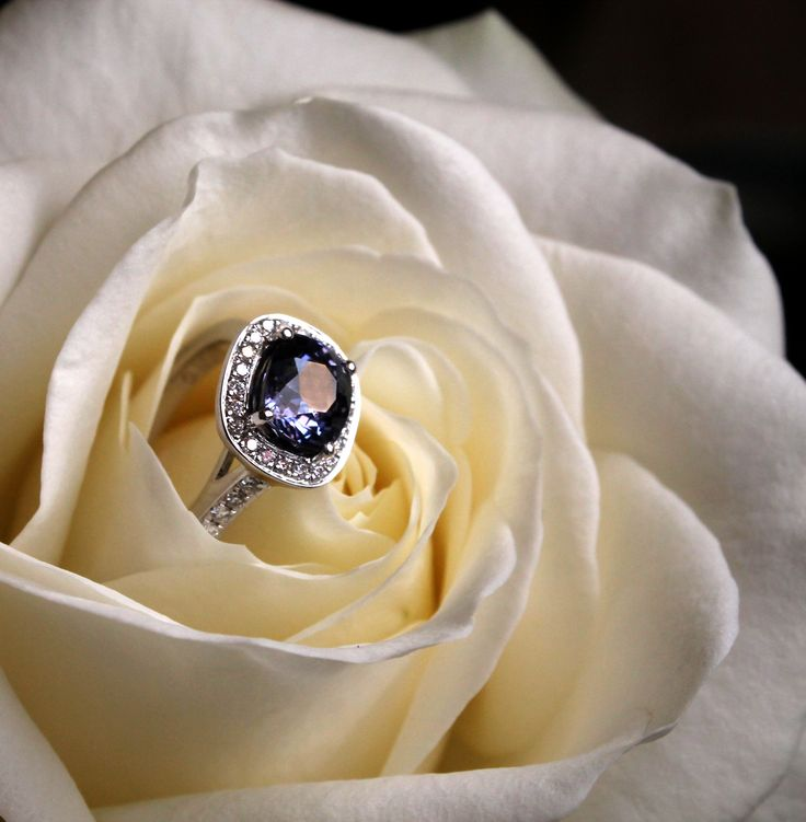 Holts Gems Mauve sapphire engagement ring set in white gold with diamonds. A very dark hues stone for an alternative bride with a darker sense of style. Proposal idea? A white rose holds an engagement ring. http://www.thejewelleryeditor.com/bridal/article/sapphire-engagement-rings-number-one-coloured-gem/ #wedding