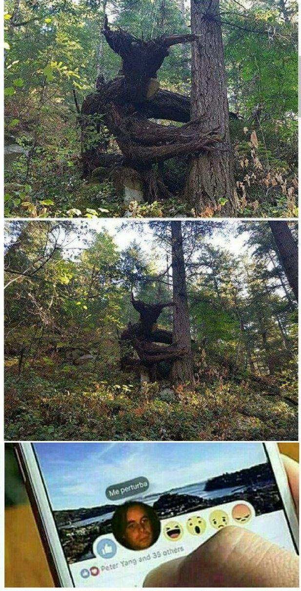 Vas tranquilamente al bosque hasta que te encontras con for Vas al