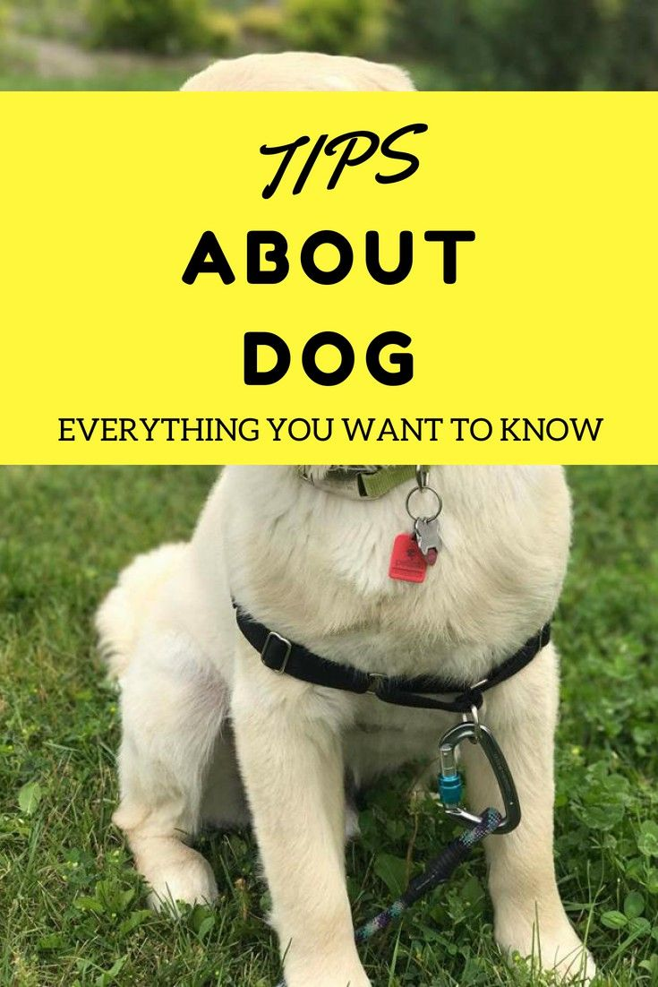 Dog Training Dog Training Tips To Tame Your Dog More Info