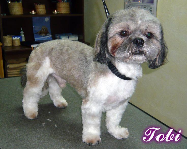 Tobi - Psi Fryzjer Snow Star on Psi Fryzjer Toruń - Salon Psiej Urody Snow Star w Toruniu  http://psiafryzurka.pl/social-gallery/tobi-psi-fryzjer-snow-star