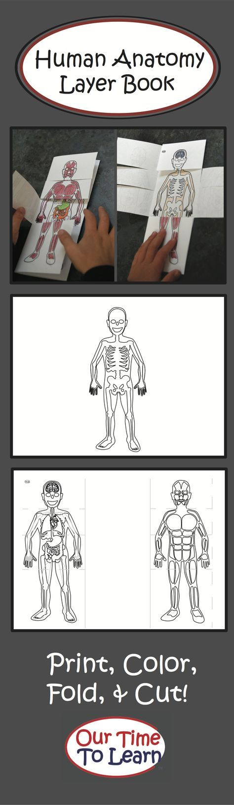 Idea para Lapbook del cuerpo humano                                                                                                                                                                                 Más