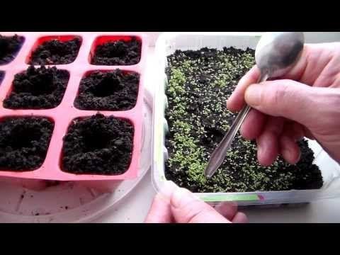 Петуния Посев семян - YouTube