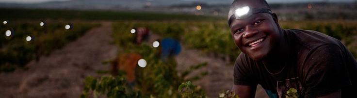 Night-harvesting MAN Vintners Chenin Blanc 2012