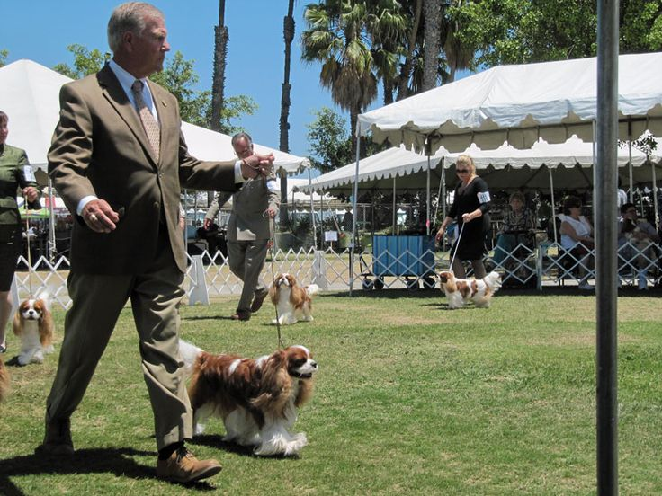 So You Want to Be a Professional Dog Show Handler?  There's a lot more to being a pro than you might think.