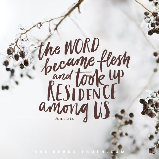 """Day 5 of the """"Christ Was Born For This"""" Advent 2016 reading plan from She Reads Truth ~ Christ the Perfect Prophet ~ Today's Text: Matthew 5:17, Luke 4:16-22, John 1:1-14, John 8:28 [...]"""