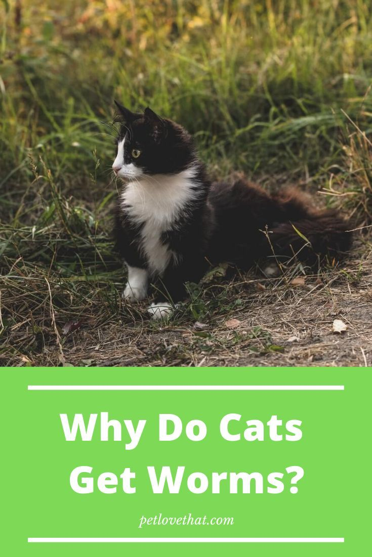 At Some Point In Life All The Cats Get Worms In Their Intestines Cats Might Be Good In Self Grooming And Maintenance But Even They C Pets Cat Questions Cats