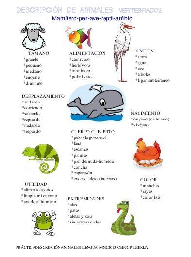 Tendré en mi  memoria , todas estas característicass variables para la   descripción del animal ;  * forma, color, extremidades, desplaza...