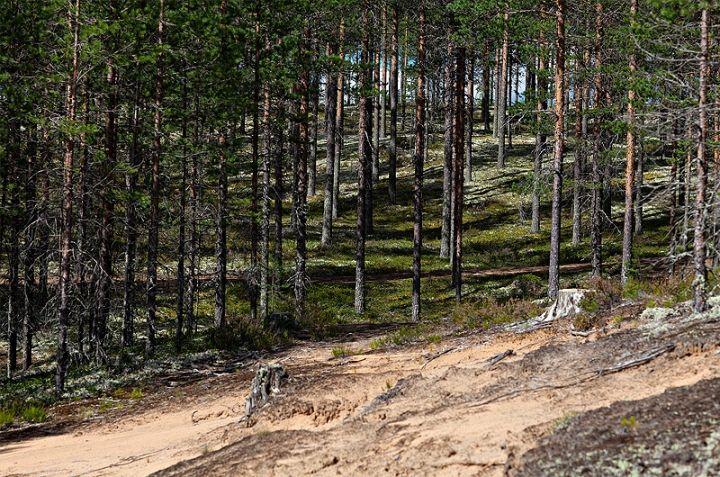 Rokua national park, Finland. Rokua Health & Spa Hotel. Finnish nature.