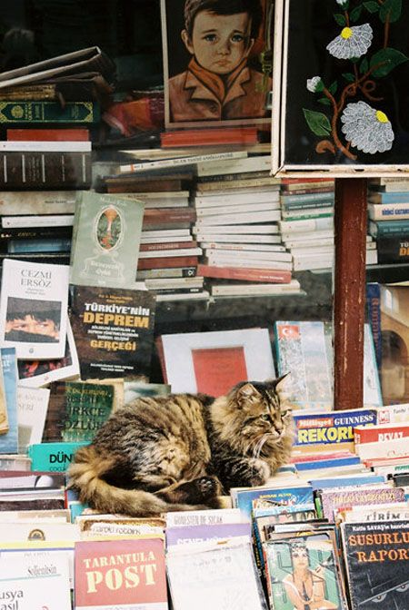 Cats Etc, Cat Guard, Libraries Cat, Cat Bookstores, Cats Cat, Smart Cat, Favourite Things Cat, Cats Book