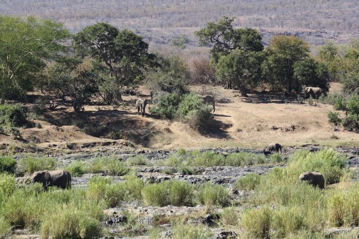 Kruger National park (SA).. an incredible experience..