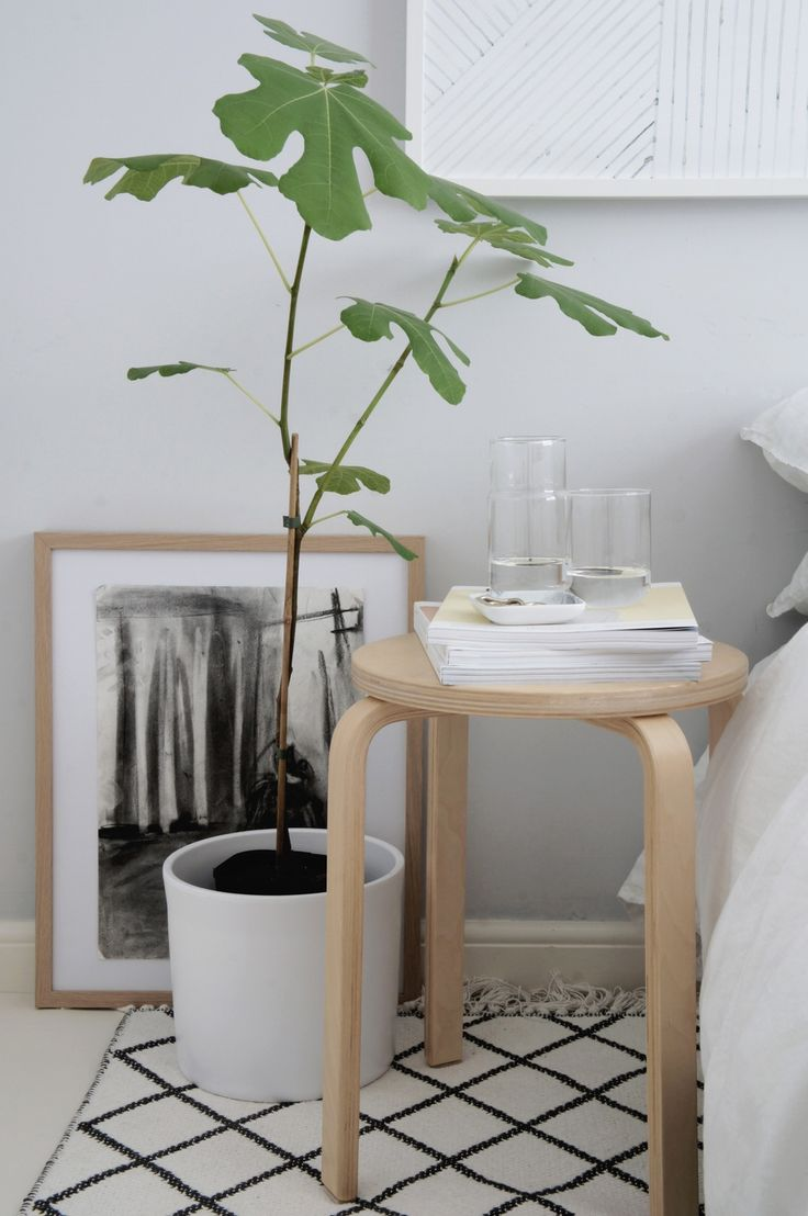 A great way to add colour to your bedroom with a fig tree or any pot plant.