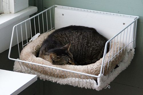 it never occurred to me to attach a cat bed to the wall.