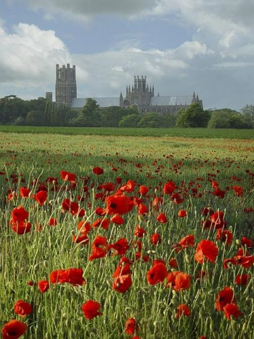 Ely Cathedral - poppy fields - it's like a fairytale...