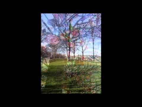 De Droomboom | Vakopdracht 1.2 Muziek - YouTube