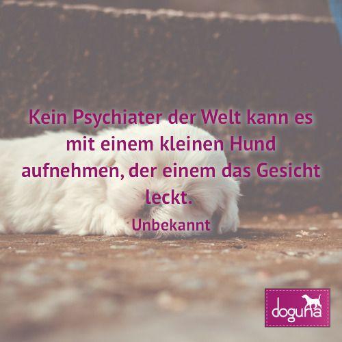 Kein Psychiater der Welt kann es mit einem kleinen Hund aufnehmen der einem das Gesicht leckt. (Unbekannt) #hund #hunde #dog #dogs #dogsofinstagram #love #beautiful #instadog #ilovemydog #doglover #dogoftheday #doggy #dogstagram #hamburg #germany #deutschland #weisheiten #lovedogs #doglove #zitate #fb