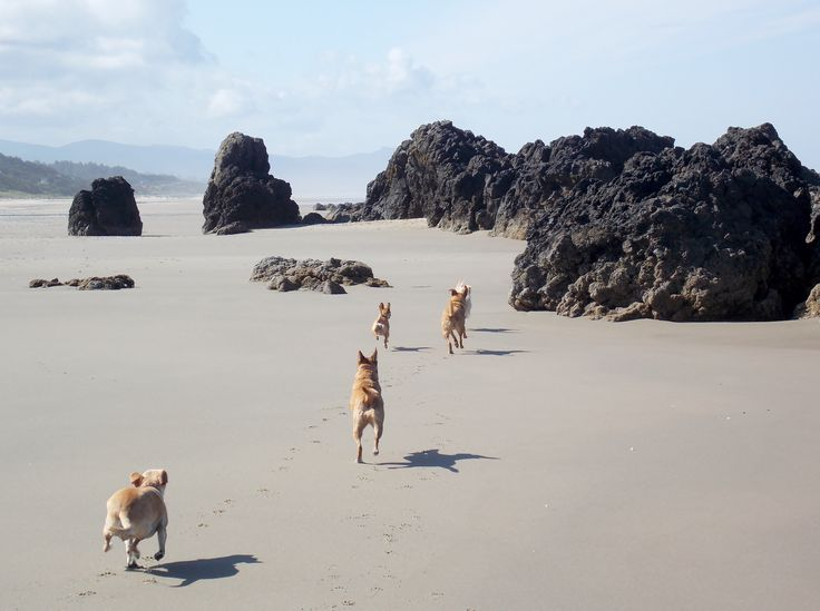 Not sure where they are all going, but they are all going!!!  My babies running at Seal Rock, Oregon!