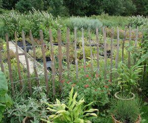 Sanguisorba is een kleinschalige kwekerij in Belgie die gespecialiseerd is in het kweken van kruiden, wilde planten en vergeten groenten.