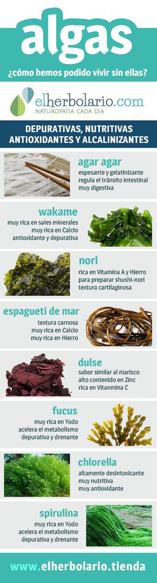 Los diferentes tipos de algas y algunas de sus propiedades y nutrientes más importantes. #algas #infografia #salud #nutricioninfografia