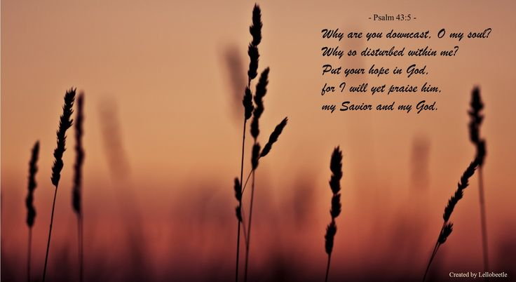 Episcopal Daily Lectionary for 9/6/14:  Psalm 43; Job 22:1-4,21-23:7; Acts 13:26-43; John 10:1-18. http://bible.oremus.org/?passage=Psalm+43 - Music: http://youtu.be/DfUjEW0YqLg