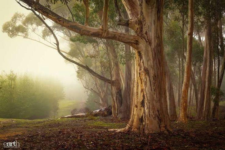 Mt. Crawford, South Australia