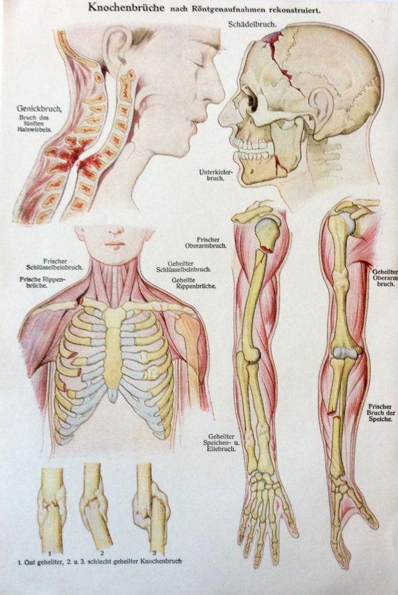 Niedlich Anatomie Des Halswirbels Fotos - Anatomie Ideen - finotti.info