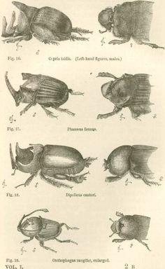 charles darwin sketches - Google Search